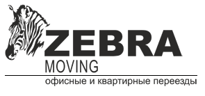 Zebra Moving